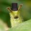 WaspArcher